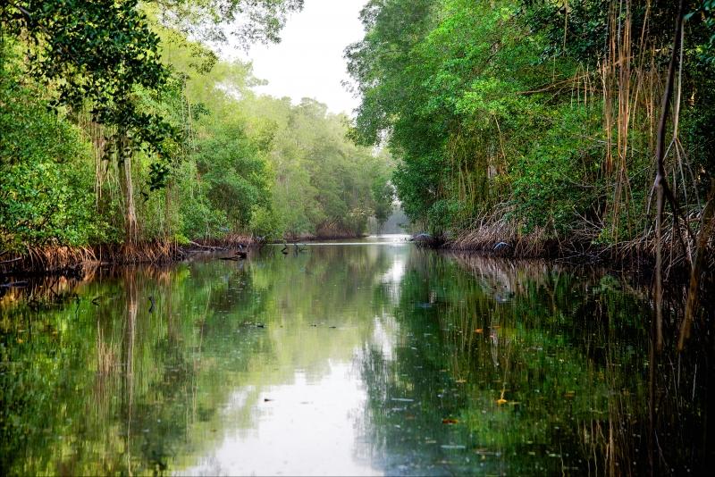 Diversity-on-mangroves